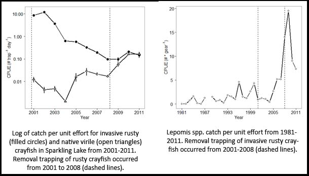 Management Of Aquatic Invasives Rusty Crayfish Removal In Sparkling